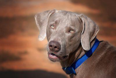 dog-987936
